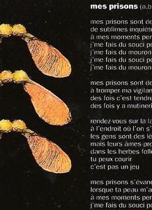 Français, une langue qui rock?